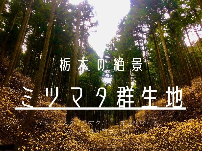 ミツマタ群生地 栃木 茂木 絶景