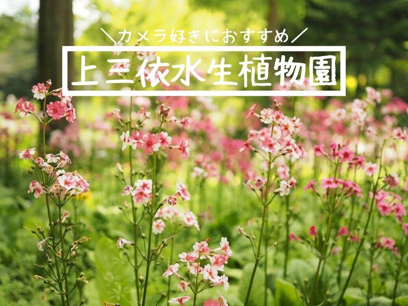 上三依水生植物園 日光 お花畑