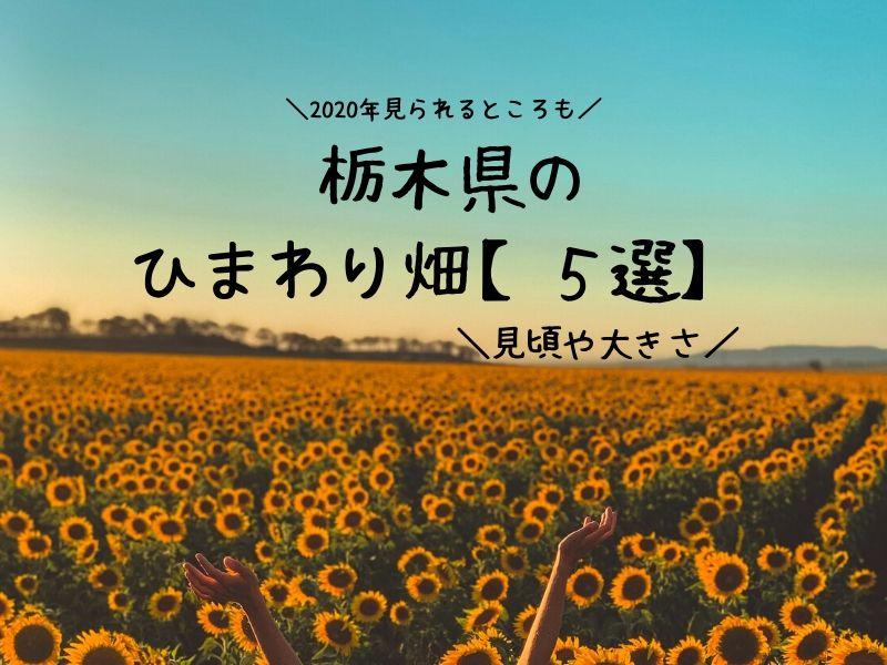ひまわり畑 栃木県 まとめ